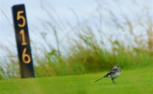 Birdie - golf