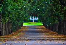 Magnolia Lane - Augusta National - The Masters