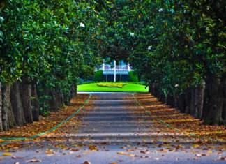 Magnolia Lane - Augusta National - The Masters